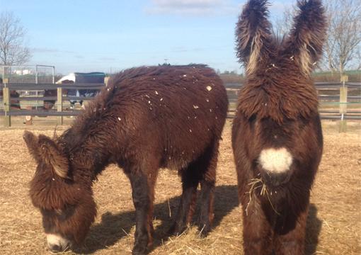 Meet our fluffy donkey foal Arya