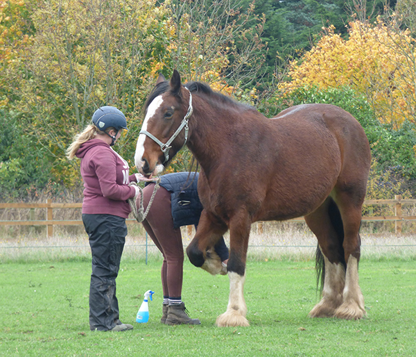 Hoof care and farrier advice