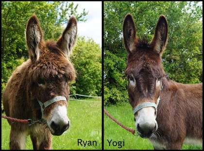 Ryan and Yogi