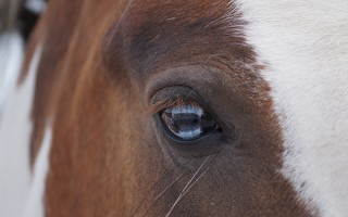 Control of Horses Act